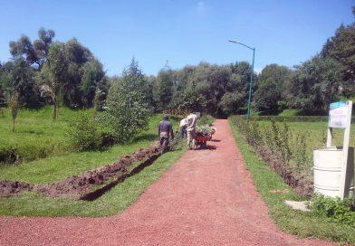 Siembra CGE seis mil árboles en tres áreas forestales
