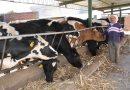 Verifica SEFOA movilización de ganado con unidades de control