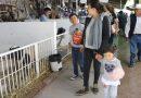 """""""Tlaxcala Feria 2019"""" te invita a visitar la Expo Ganadera"""