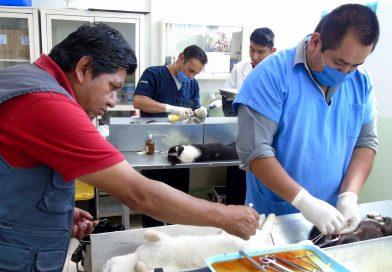 Módulo canino ofrece servicios integrales: SESA