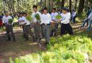 Entregará CGE 200 mil árboles ornamentales con el programa «Donación de Planta»
