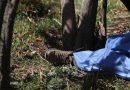 Fallece adulto mayor por caída de árbol