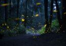 Realiza SECTURE recorridos virtuales del avistamiento de luciérnagas