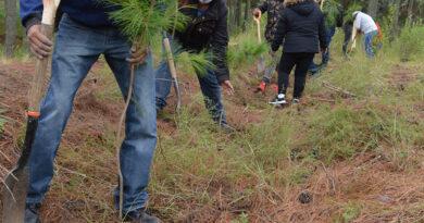 CGE inició reforestación en el Parque Nacional Malinche