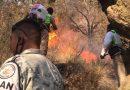 Combaten autoridades incendios forestales en Tlaxcala